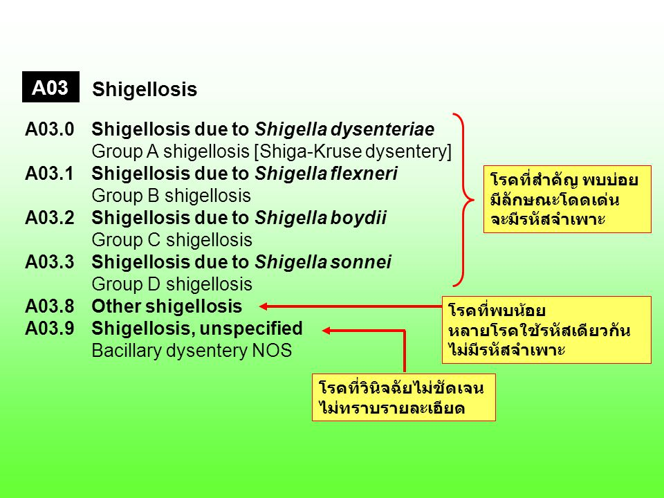 A03 Shigellosis. A03.0 Shigellosis due to Shigella dysenteriae Group A shigellosis [Shiga-Kruse dysentery]